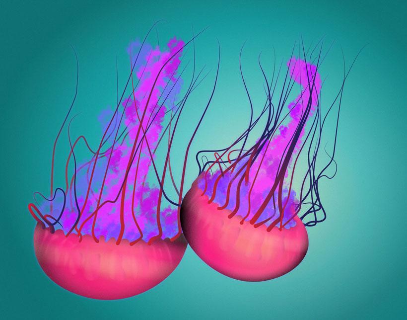QwkDog Portfolio Sea Life Jellyfish Green