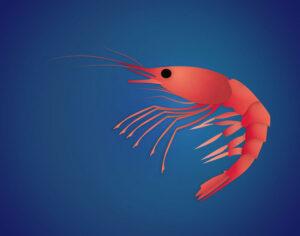 QwkDog Portfolio Sea Life Shrimp